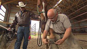 Joel Bernier, maréchal équestre, au travail dans un ranch à Fisher Branch au Manitoba.