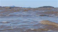 Une solution au cancer dans le fleuve Saint-Laurent?