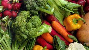 Des étudiants développent une serre de fruits et de légumes dans le Grand Nord