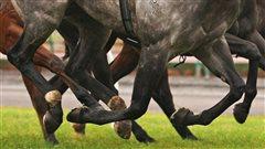 Deux chevaux suspendus pour dopage à l'EPO