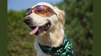 Cannabis et animaux: 5faits à savoir