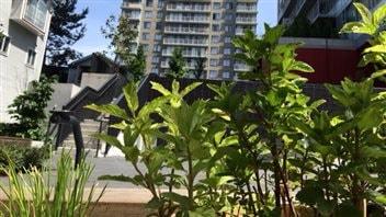 Vancouver : les jardins de fines herbes fleurissent dans le quartier WestEnd