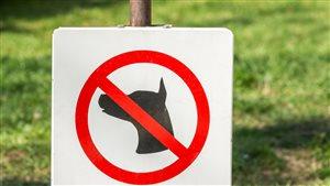 Un panneau indiquant que les chiens sont interdits