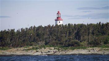 L'Île Bicquette, repaire bien gardé des eiders à duvet