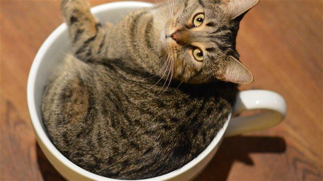 Les cafés des chats se multiplient à travers le pays.