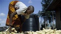 La production agricole menacée par le réchauffement climatique