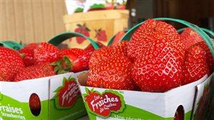 La fraise du futur sous la loupe de spécialistes du monde entier à Québec