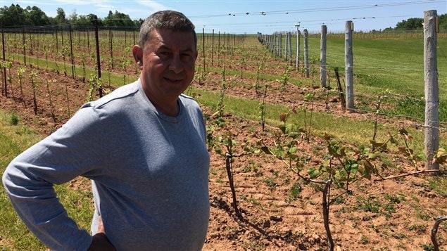 Jaime Matos, vignoble à l'Îe-du-Prince-Édouard