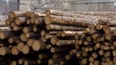 Négociations de la dernière chance dans le dossier du bois d'oeuvre