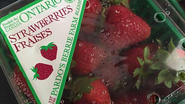 Des fraises de l'Ontario