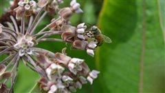 Soie d'Amérique : des cultivateurs du Vermont s'allient à la coopérative Monark