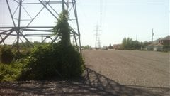Ottawa pris de court par des travaux sur un terrain visé par le décret sur la rainette faux-grillon