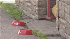 Halifax se met au pas des chiens!