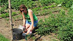 Chroniques Tendances : le wwoofing, combiner agriculture et voyage