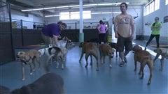 À Halifax, un service de garde pour chiens défend les pitbulls