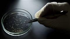 Un premier bébé atteint du Zika voit le jour en Europe
