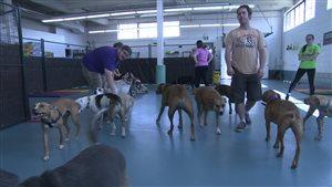 Tristan Flynn a regroupé 20 pitbulls sous un même toit pour prouver qu'ils ne présentent aucun danger.