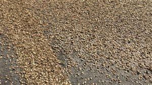 Des milliers d'insectes ont envahi une concession automobile à Campbellton, N.-B.