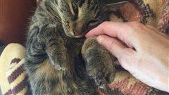 Un chat pris dans un piège à spermophile de Richardson illégal