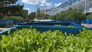 Un jardin sur le toit de l'université de la Saskatchewan