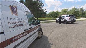 La SPA de l'Estrie et le Service de police de Sherbrooke se sont rendus sur les lieux vendredi après la morsure subie par un garçon de 13 ans.