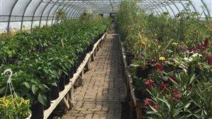 Une serre dédiée à la production de légumes au Centre jardin Lac Pelletier.