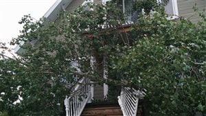 Un arbre, qui a été déraciné, est tombé sur cette résidence du secteur Saint-Méthode.