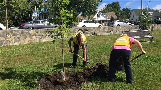 La Ville de Rouyn-Noranda a souligné la participation d'une quarantaine de personnes à l'opération Ramasse ton parc en plantant un arbre dans le parc Trémoy.