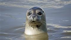 Un nouveau groupe à la défense de la chasse aux phoques
