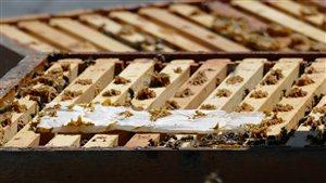 L'intérieur d'une ruche