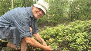 Louis Brien, 75 ans, cueilleur de bleuets