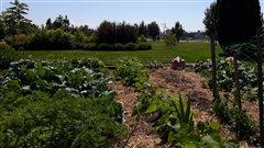 Apprendre en jardinant, un projet d'école autosuffisante à Trois-Rivières