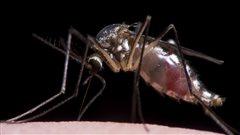 D'autres moustiques porteurs du virus Zika découverts à Miami Beach