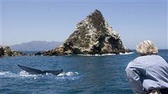 La baleine bleue : de l'infiniment grand à l'infiniment petit