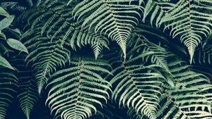 Vous avez une question pour notre designer de jardin Frédérique Allard?