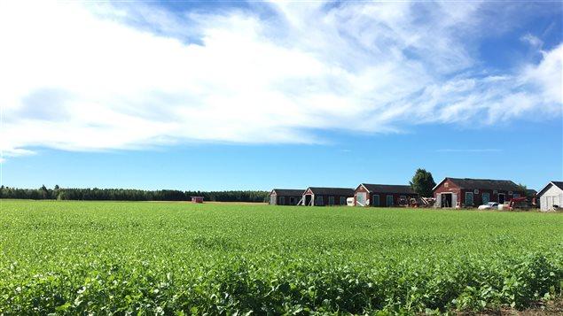 Un champ au Nouveau-Brunswick