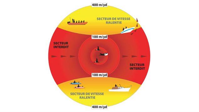 Le schéma des directives d'approche des baleines de Pêches et Océans Canada.