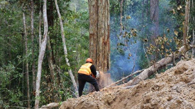 L'empreinte écologique humaine a augmenté rapidement dans les zones sensibles de biodiversité.