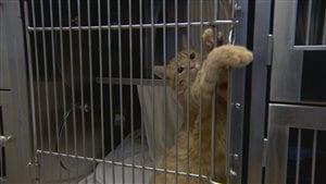 Il y a une surabondance de chats dans les refuges pour animaux à Edmonton.