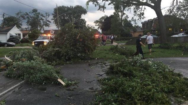 La tornade a déraciné des arbres et fait tomber des branches à LaSalle.