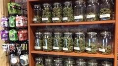 Cannabis : «surtout, ne faites pas comme les États-Unis!»