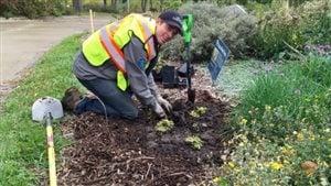 La ville d'Edmonton souhaite conserver les pelouses à l'état naturel.