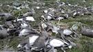 Plus de 300 rennes tués par la foudre en Norvège