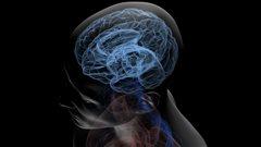 Démystifier les hémisphères du cerveau