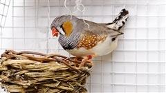 Des oiseaux chantent le réchauffement climatique à leurs oeufs