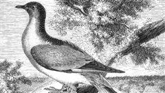 100e anniversaire de la convention sur les oiseaux migrateurs