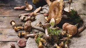 Guide pour une cueillette de champignons sécuritaire