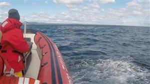 Collision entre un zodiac et une baleine: deux occupants ont été éjectés du bateau