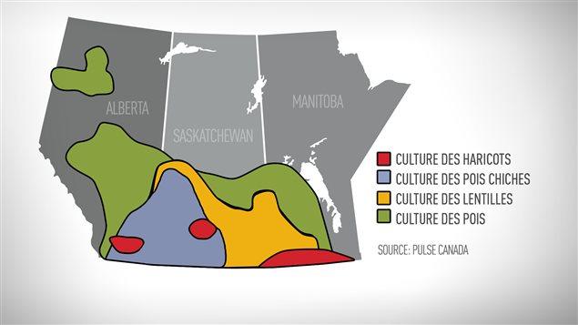 La culture de légumineuses en Saskatchewan