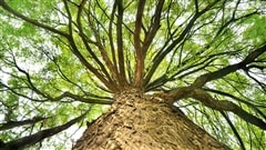 Septembre, le mois pour planter des gros arbres